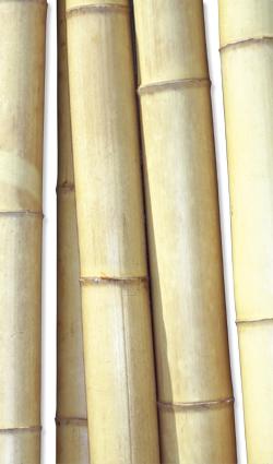 Deko-Bambus - Deko- Bambus natur 35/40mm x 310cm