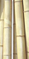 Deko- Bambus natur&35/40mm x 310cm